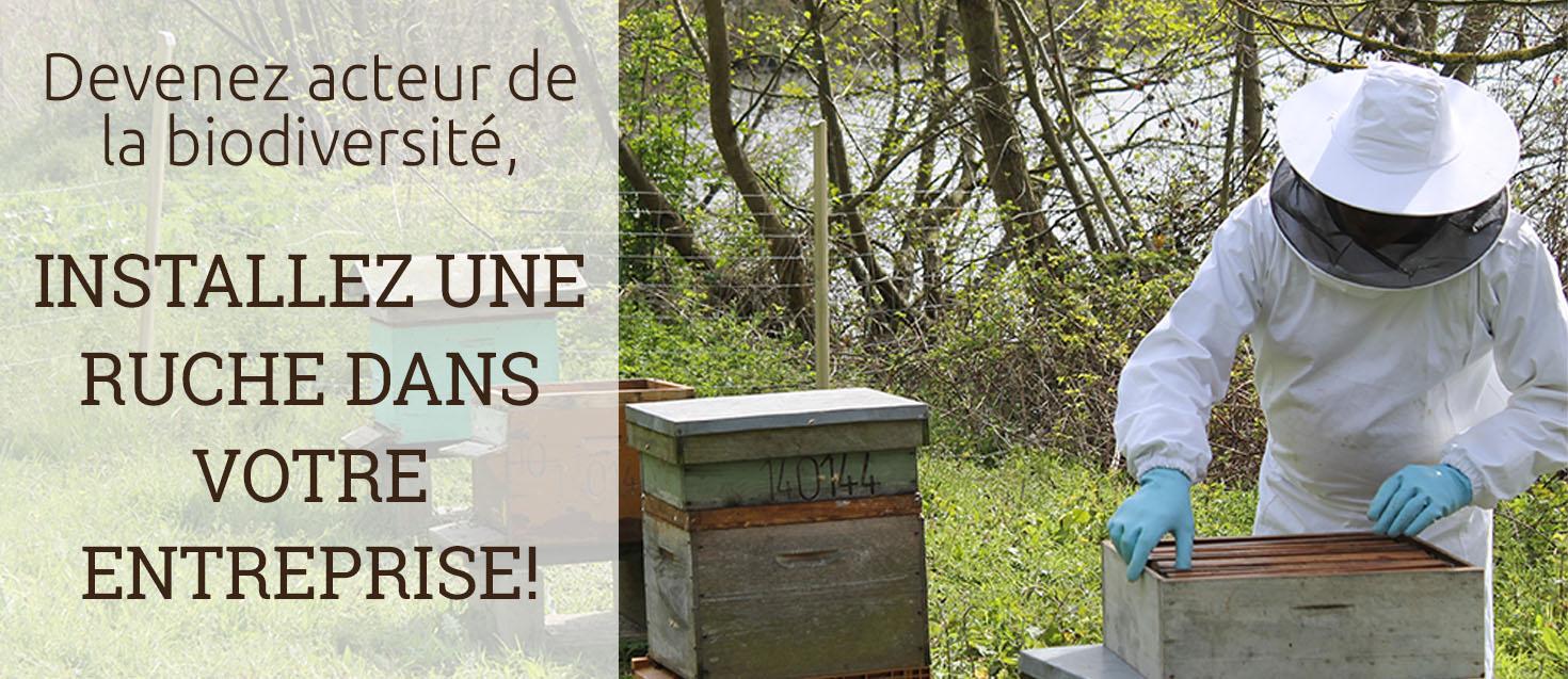Pose de ruches
