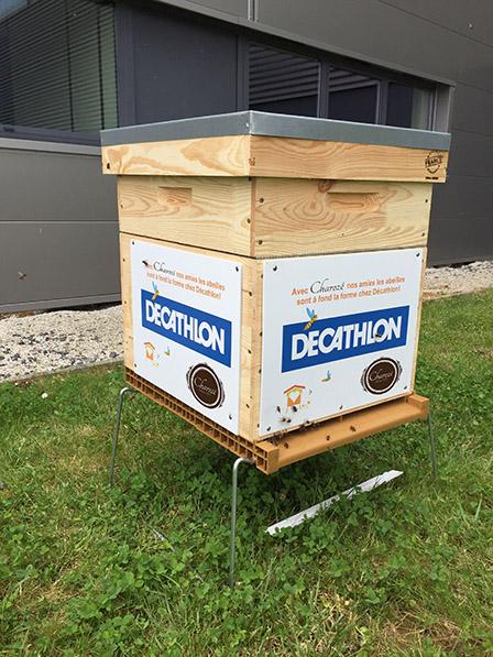 Pose de ruche en entreprise