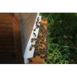achat d'essaims d'abeilles noires ou buckafst